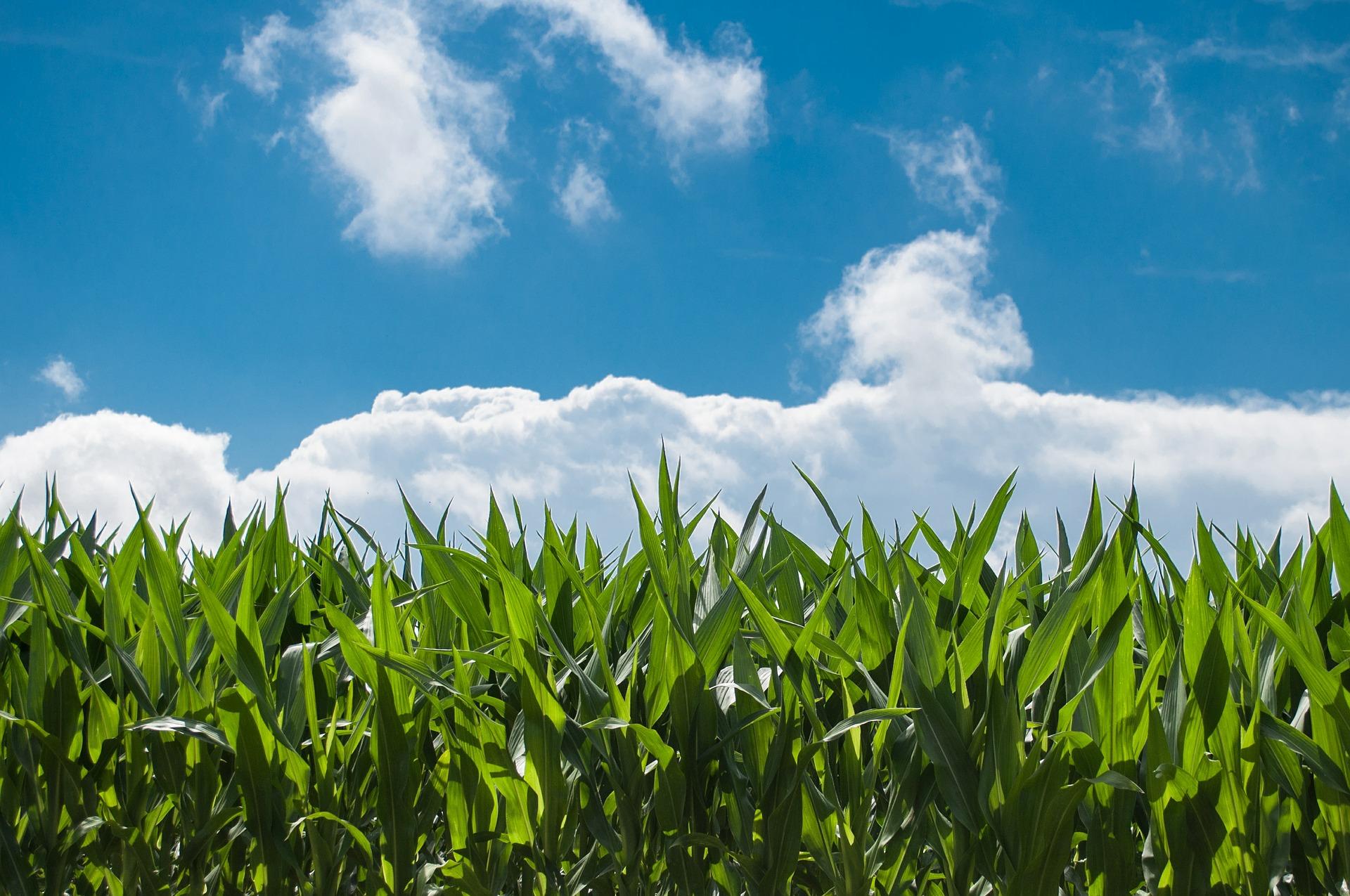 Agrosysteme